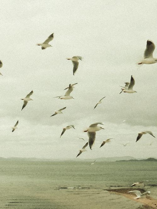 モンチッチ海岸